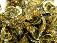 牡蛎(图7)